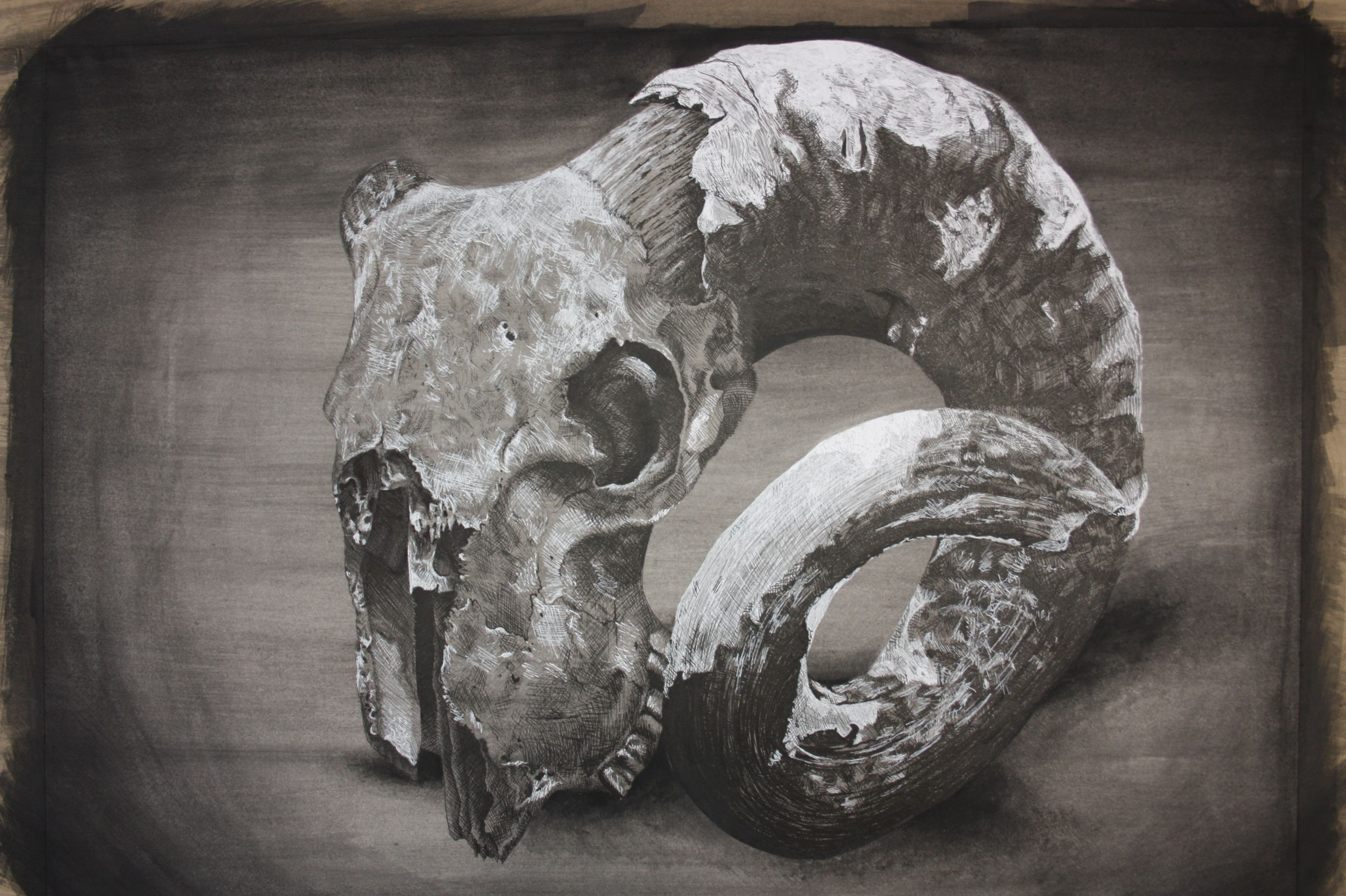 Livia Robinson, Thomas Alleyne's High,Skull, unframed 40cm x 50cm, watercolour pen and ink.jpg