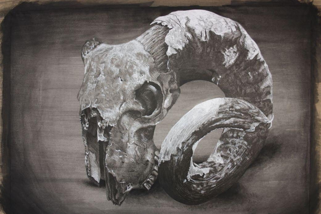 Livia Robinson, Thomas Alleyne's High,Skull, unframed 40cm x 50cm, watercolour pen and ink.jpg