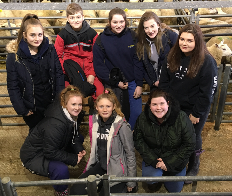 junior shepherding